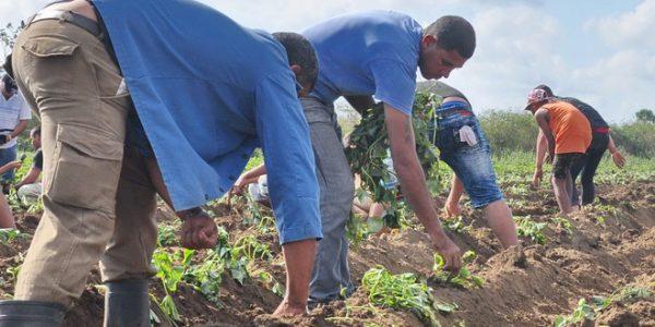 El trabajo productivo hermana a los hombres, da conciencia y de ello saben los jóvenes pineros