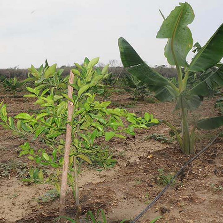 Recorrido Agri FOTO 3