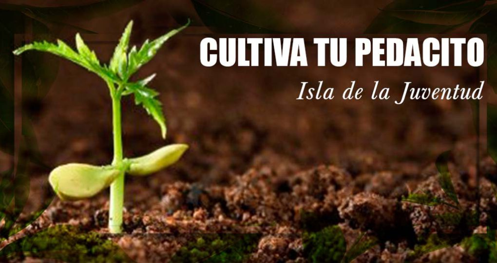 Cultiva tu pedacito – Planta