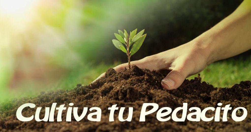 Cultiva tu pedacito – con sol